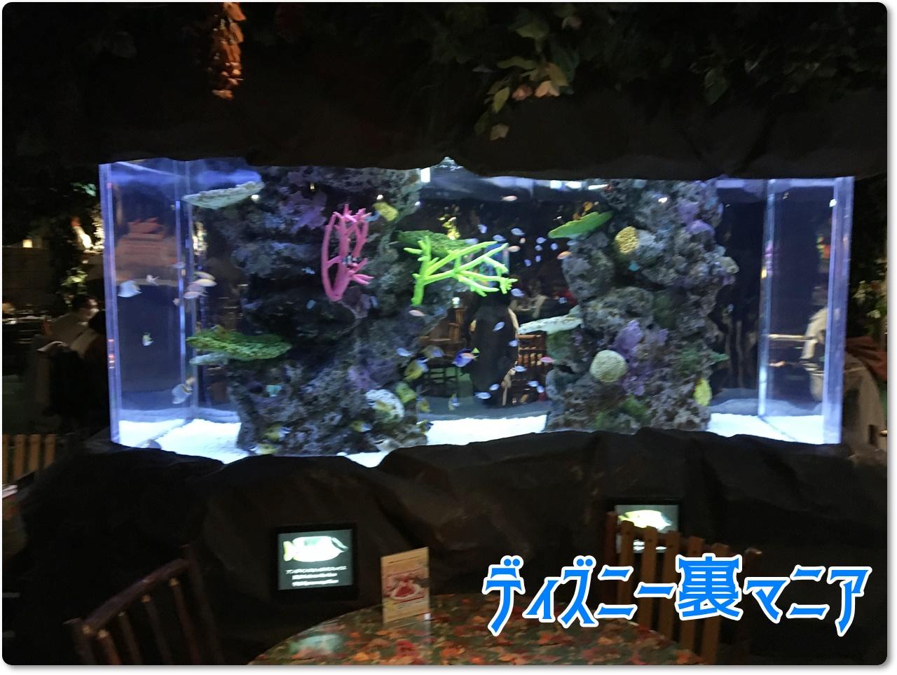 レインフォレストカフェ 水槽2