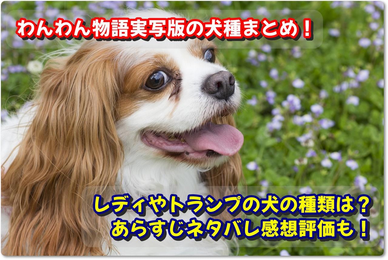 犬種 わんわん物語 実写 『わんわん物語』冒険よりお家が一番。たとえポリシーを曲げても。